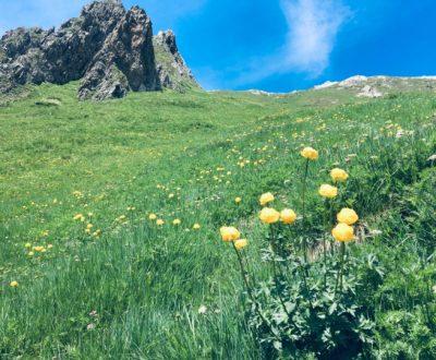 geschützte Pflanzen, Artenviellfalt, seltene Bergblumen, Bergkräuter und Gräser