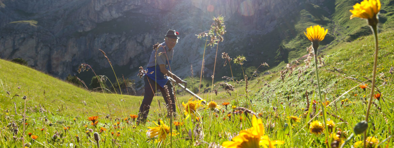 Bergblumen, Bergkräuter, Berggräser, alpine Vegitation, geschützte Pflanzen