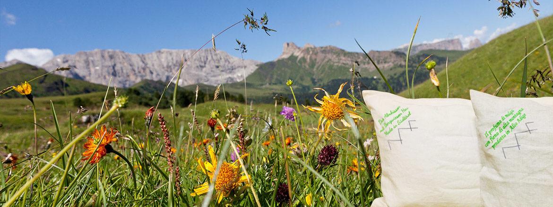 Das Almkissen, Bergkräuter, Bergwiesen Heu, Südtiroler Almwiiesen