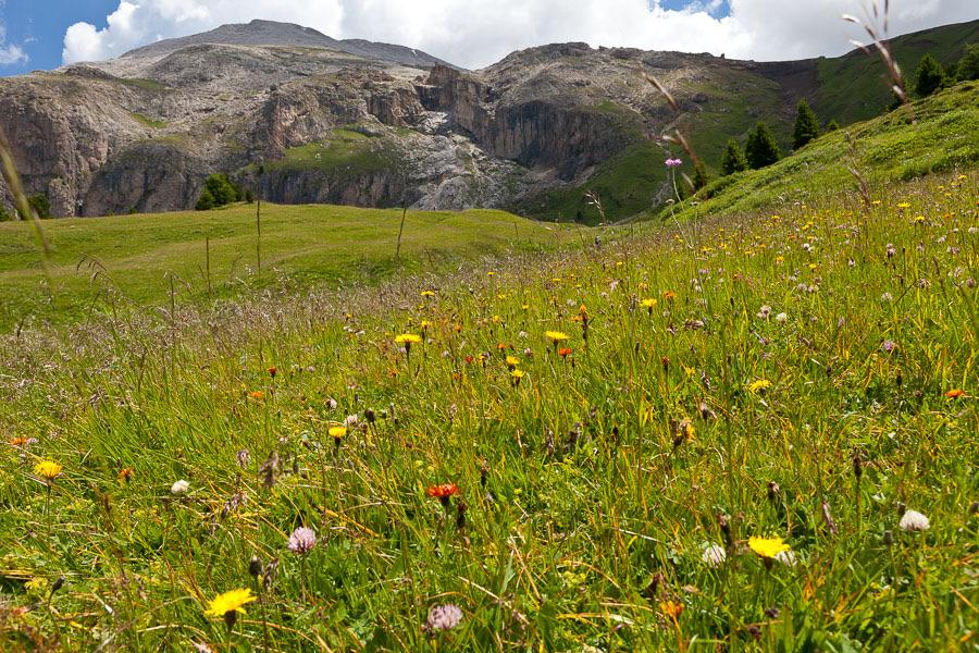 Bergwiesen Flora, Artenvielfalt, ätherische Öle, Cumarin,